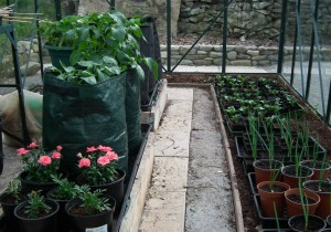 Greenhouse in Spring